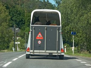 Two horses in a horse box