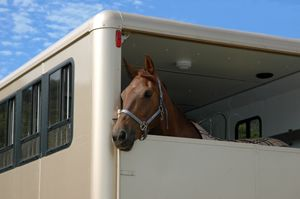 Horse in a white horse box